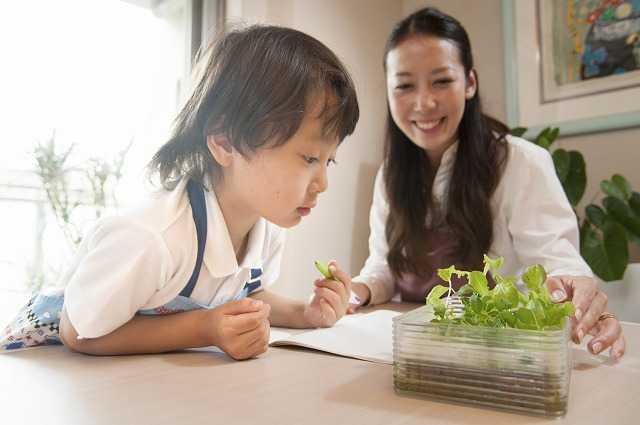 8・2オンラインで「報知・ファミリー水耕栽培教室」を開催!