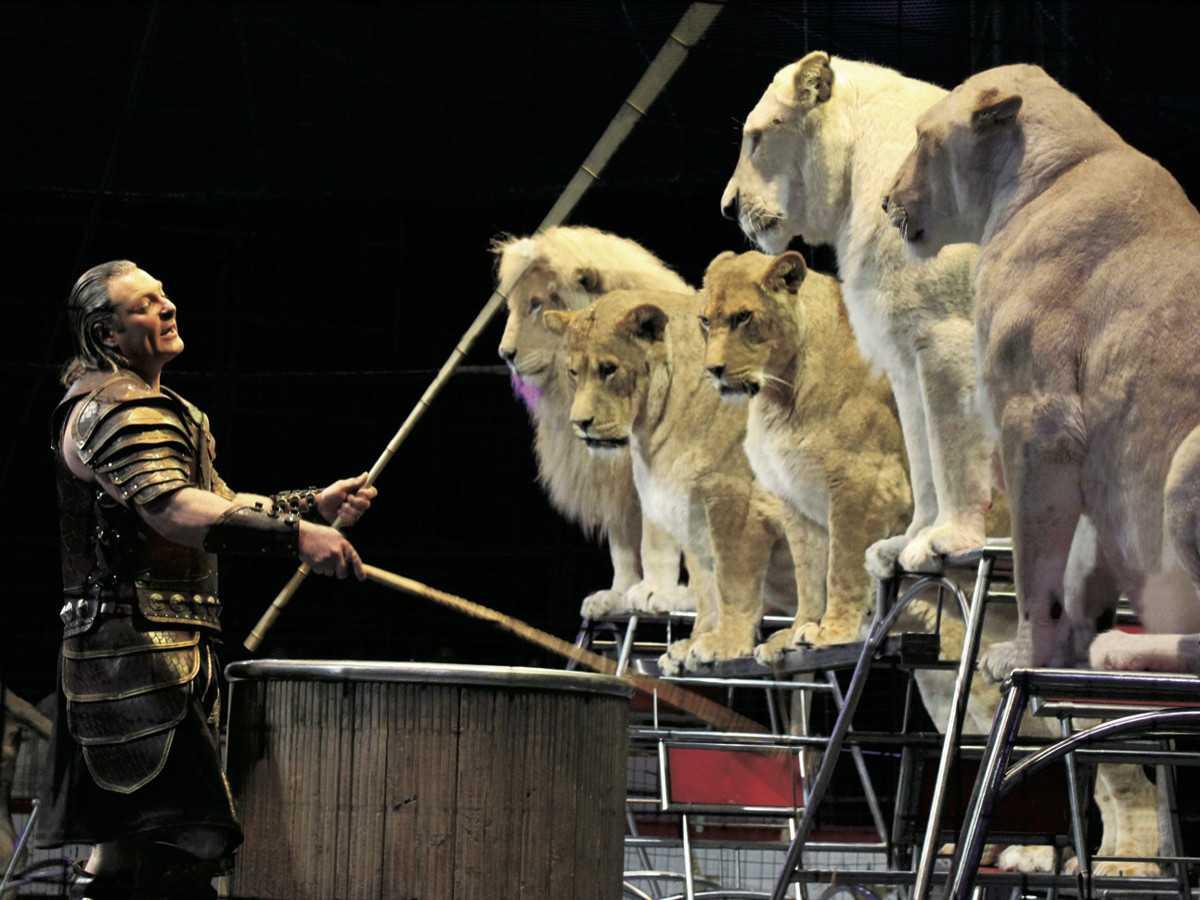 奇跡のホワイトライオン世界猛獣ショー